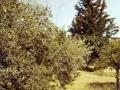 G 1972 Gerico - Il giardino attorno alla casa